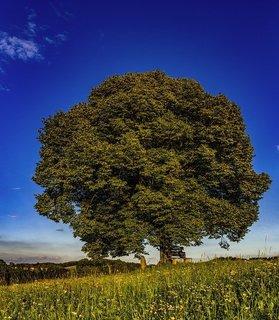 tree-2639063_640.jpg